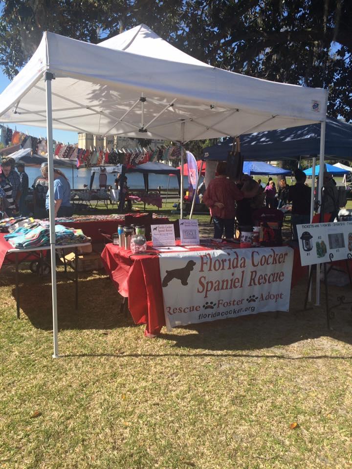 Florida Cocker Spaniel Rescue Photos
