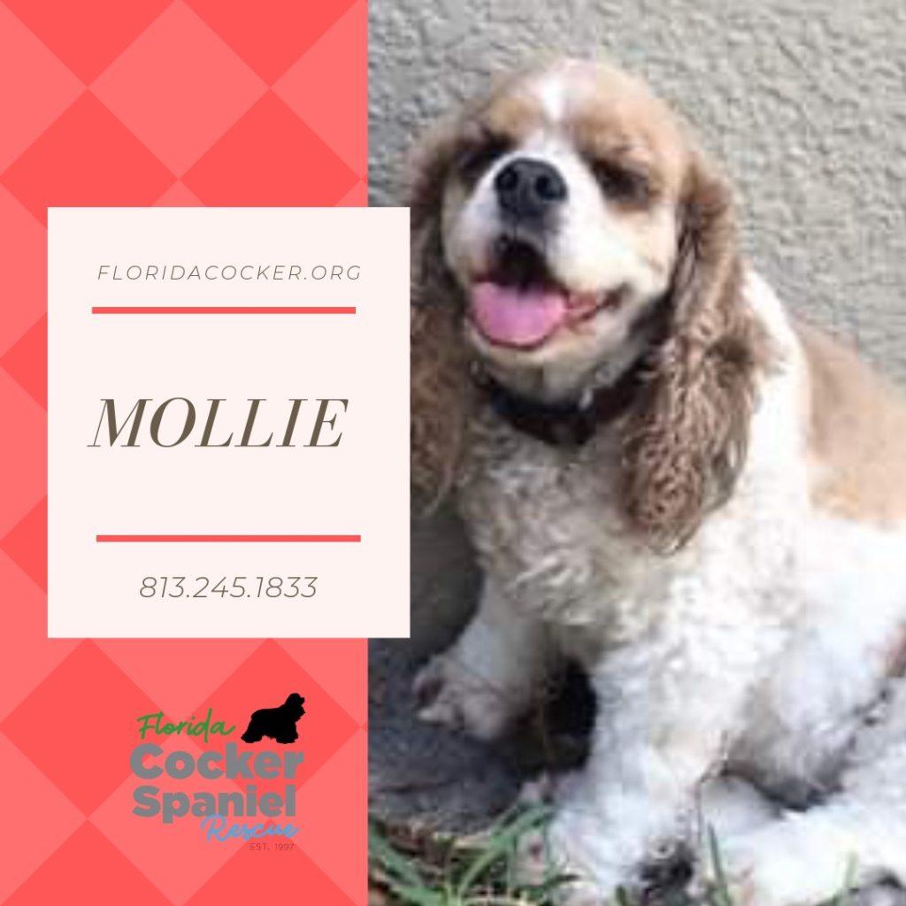 mollie-1