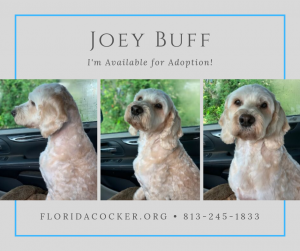 Joey Buff
