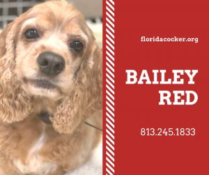 Bailey Red