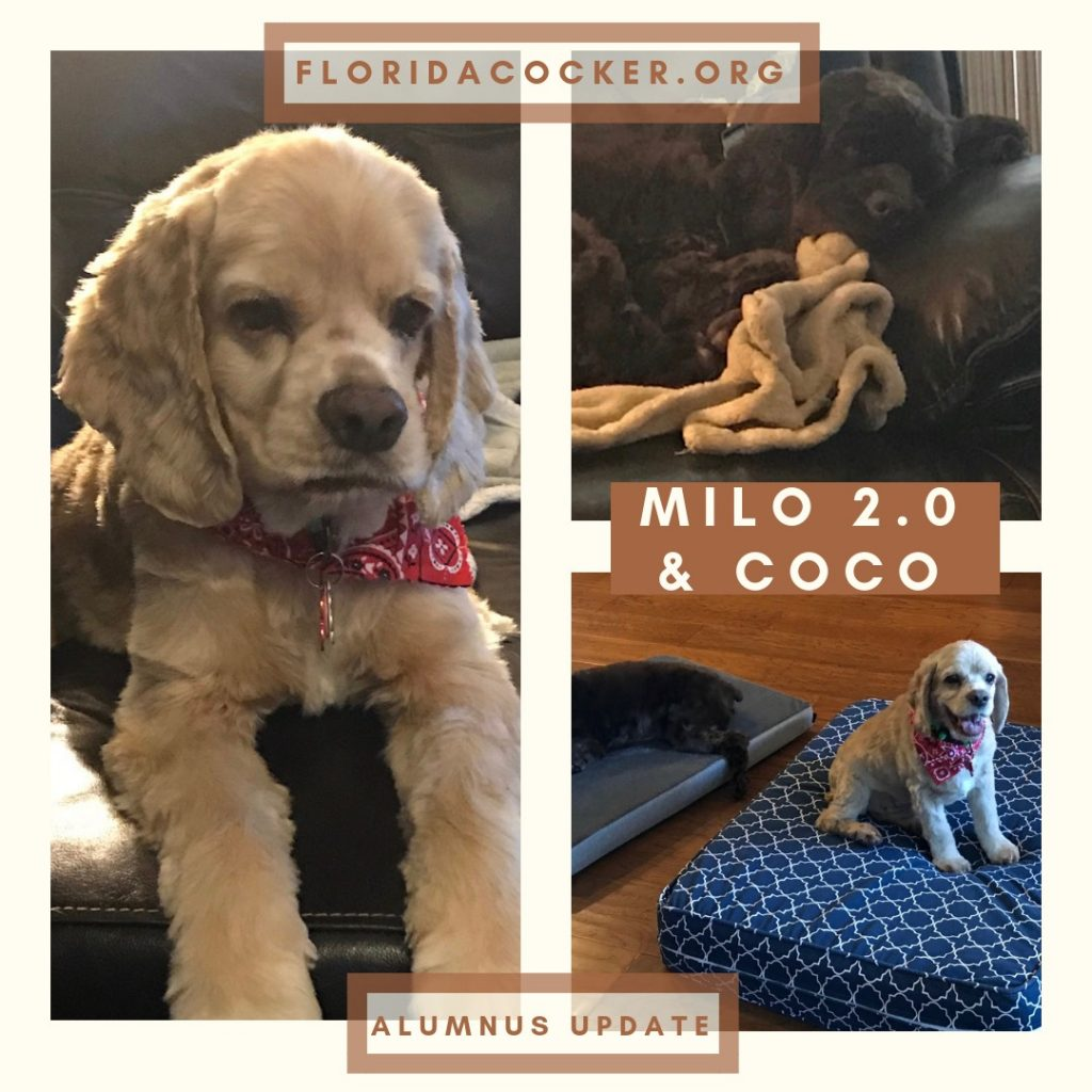 Milo And Coco Success