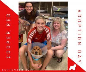Cooper Red Adopt