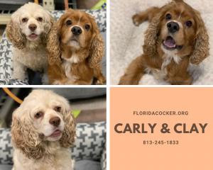 Carly & Clay