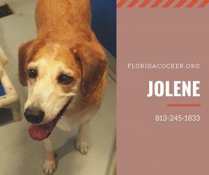 Jolene(1)