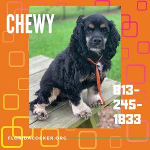 Chewey