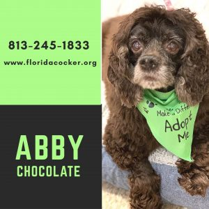 Abby Chocolate