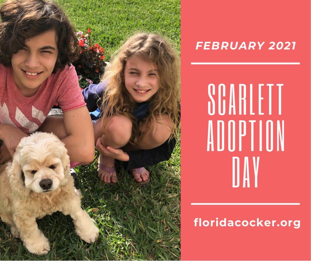 Scarlett Adopt