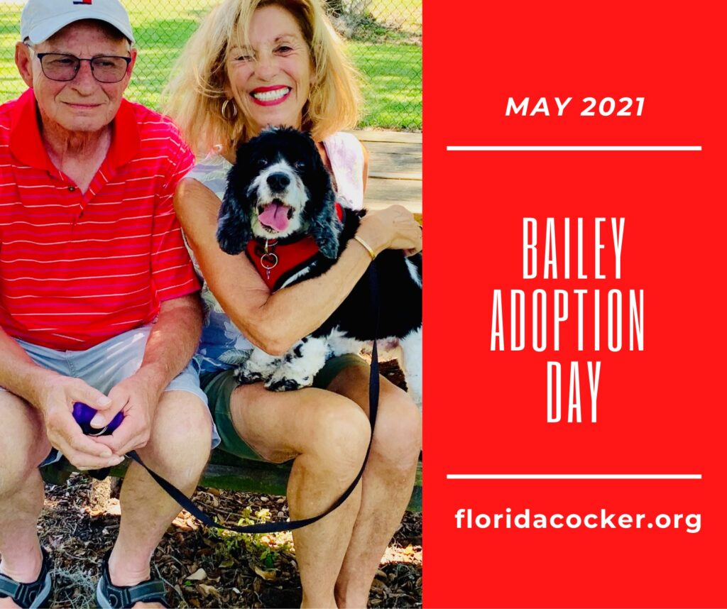 Bailey Adoption