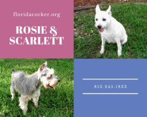 Rosie And Scarlett