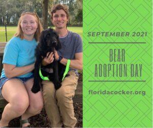 Bear Adopt