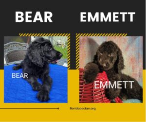 Bear And Emmett