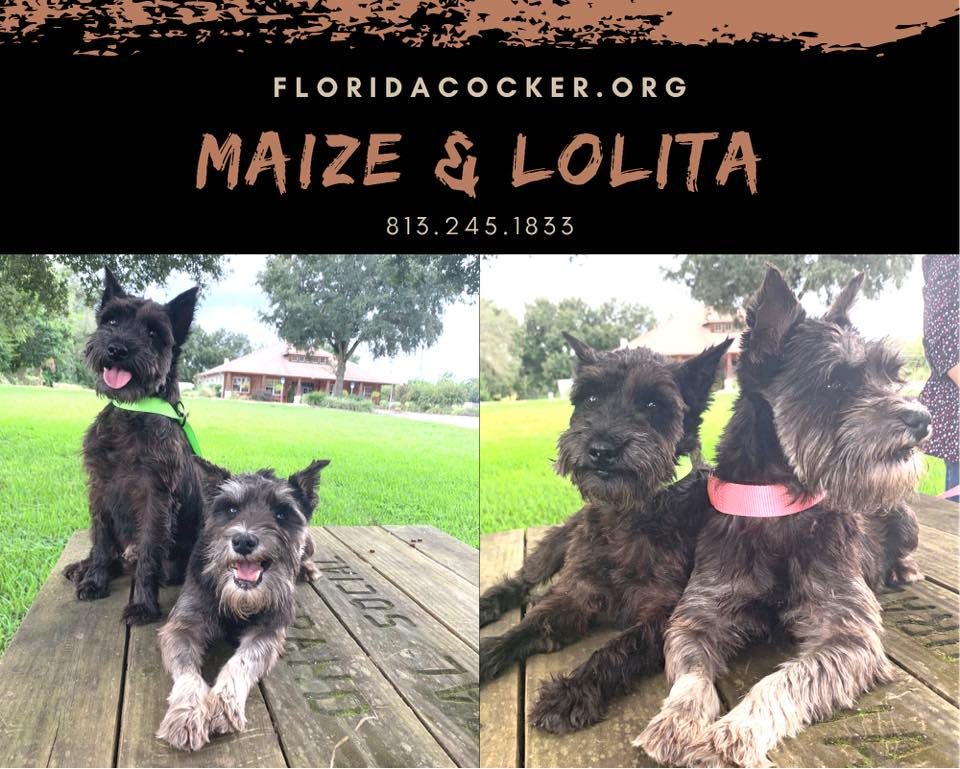 Maize And Lolita